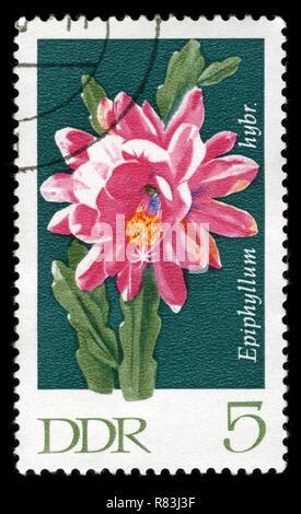 Sello postal de la Alemania Oriental en el Cactus serie publicada en 1970