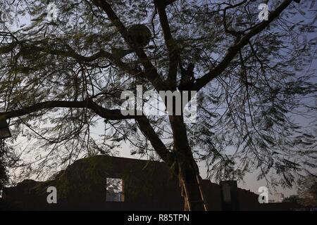 Dhaka, Bangladesh. 13 Dec, 2018. Un trabajador establece un altavoz en un árbol delante del martirizado país memorial intelectual como preparación para observar el día intelectuales martirizados en Rayer Bazar. Crédito: MD Mehedi Hasan/Zuma alambre/Alamy Live News