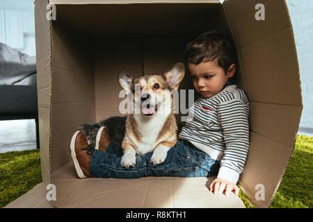 Adorable Welsh Corgi pembroke sentado con Little Boy en caja de cartón