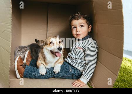 El enfoque selectivo de chico con adorables corgi y british longhair gato sentado en caja de cartón