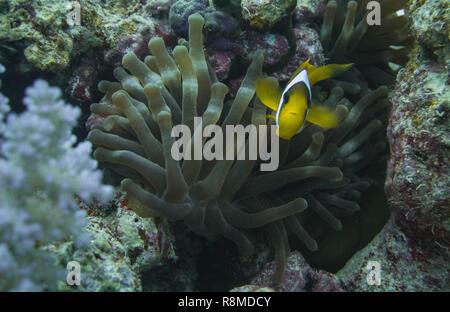 1-wöchige Tauchsafari am Roten Meer, Marsa Alam en Ägypten
