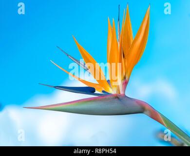 El ave del paraíso flores florecen en el jardín del amor. Esta es la flor que simboliza las aves voladoras que expresan la libertad en la vida