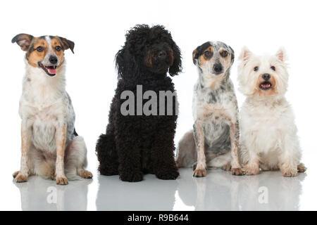 Cuatro perros aislado en blanco Foto de stock