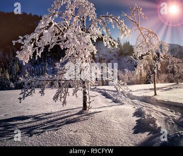 DE - Baviera: Escena de Invierno cerca de Otoño