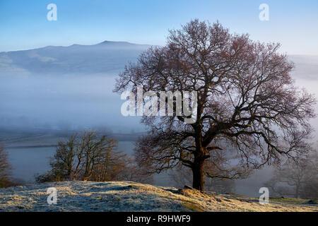 Amanecer sobre un valle rodeado por la helada niebla de baja altitud con árboles en invierno Foto de stock