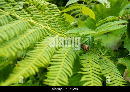 Helecho verde bush con caracoles Foto de stock