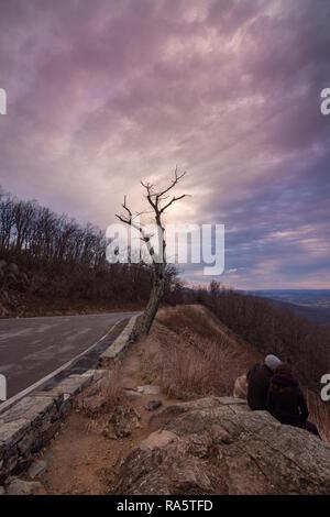 Árbol durante el año nuevo amanecer en el túnel mirador en el Parque Nacional Shenandoah