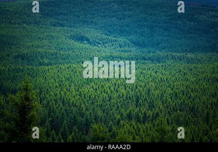 Un interminable bosque de montaña en verde y azul