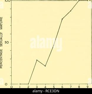 . Informes de descubrimiento. Discovery (Barco); expediciones científicas; océano; la Antártida; Islas Malvinas. Longitud en pies Text-Fig. 33. Suavizan las frecuencias de longitud de sexualmente inmaduros y las hembras sexualmente maduras. 2 3 4 5 6 7 8 AÑOS DE Ear Plug (años) Texto-Fig. 34. Porcentaje de las hembras sexualmente maduras en sucesivos grupos de edad. como una distribución de frecuencia normal, con un valor medio que corresponde a la duración media en la pubertad, la media es de 65-41 pies. (Desviación estándar 2-07, 0-16 de error estándar). Esto está en estrecho acuerdo con el valor del punto de intersección de las curvas. La longitud promedio en pu