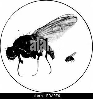 . Insectos perjudiciales : cómo reconocer y controlarlos . Las pestes del insecto; plagas de insectos. Los gusanos de las raíces ATTACKIXG 119. Por favor tenga en cuenta que estas imágenes son extraídas de la página escaneada imágenes que podrían haber sido mejoradas digitalmente para mejorar la legibilidad, la coloración y el aspecto de estas ilustraciones pueden no parecerse perfectamente a la obra original. O'Kane, Walter Collins, b. 1877. Nueva York: Macmillan Company