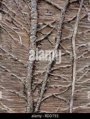 Tallos de hiedra seca madera de escalada