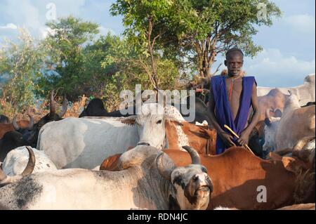 Surma herder con ganado cerca de Tulgit, Valle del río Omo, Etiopía, África