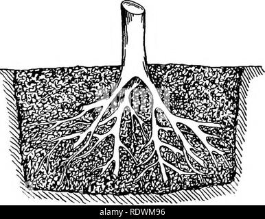 . Principios de la cultura de plantas; un tratado elemental diseñado como un libro de texto para principiantes en la agricultura y la horticultura. La horticultura y la Botánica. . Por favor tenga en cuenta que estas imágenes son extraídas de la página escaneada imágenes que podrían haber sido mejoradas digitalmente para mejorar la legibilidad, la coloración y el aspecto de estas ilustraciones pueden no parecerse perfectamente a la obra original. Goff, E. S. (Emmett Stull), 1852-1902. Madison, Wisconsin , el autor
