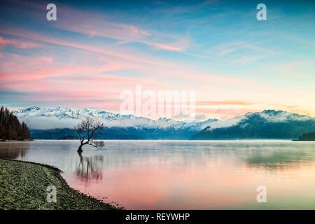 En invierno el Lago Wanaka, Otago, Nueva Zelanda, mientras que las aves se posan en el árbol único y la bruma elevándose desde el agua.