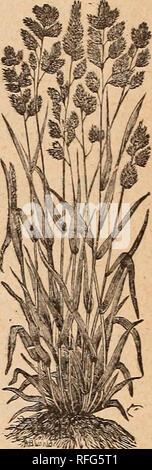""". Catálogo anual : probado y fiable, jardín, campo y semillas de flores. Viveros de Cincinnati, Ohio; catálogos Catálogos de semillas de hortalizas, semillas de gramíneas, Flores de catálogos catálogos catálogos; implementos agrícolas. No sólo somos vendedores, pero uno de los mayores compradores de """"efectivo"""" en el Estado, de todas las variedades de semillas de césped y campo, Fancy semillas de granos, etc. Estaría encantado de recibir muestras de cualquier stock de Fantasía puede ofrecer.. Por favor tenga en cuenta que estas imágenes son extraídas de la página escaneada imágenes que podrían haber sido mejoradas digitalmente para mejorar la legibilidad, la coloración y el aspecto de"""