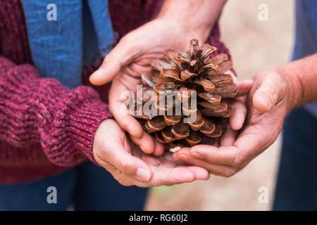 Par de manos del Cáucaso tomar y proteger un cono de pino juntos - suavemente y amablemente con la naturaleza humana para construir un mundo nuevo