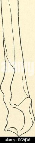 . Boletín de la Socit vaudoise des Sciences Naturelles. Historia natural; Historia Natural -- Suiza. o 5. Por favor tenga en cuenta que estas imágenes son extraídas de la página escaneada imágenes que podrían haber sido mejoradas digitalmente para mejorar la legibilidad, la coloración y el aspecto de estas ilustraciones pueden no parecerse perfectamente a la obra original. Socit vaudoise des Sciences Naturelles. [La Socit Lausanne :