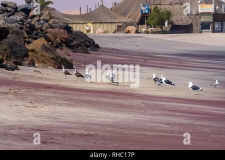 Dos gaviotas en pie sobre el mar de rocas, rodada en Swakopmund, Namibia en verano