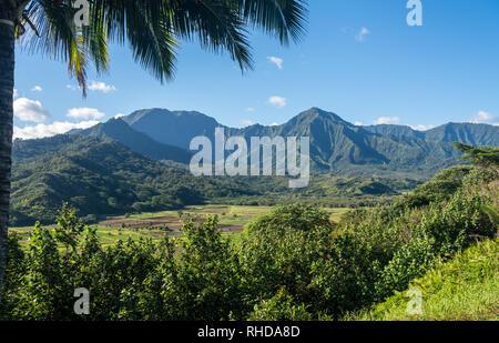 Campos de Taro en valle de Hanalei de Princeville vistas