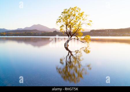 Que Wanaka árbol sauce, árbol que crece en el lago es muy popular en la escena turística de larga exposición con el atardecer colores reflejados desde nevados behin