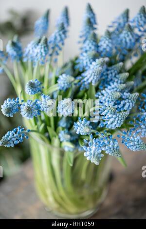 Bouquet de flores en vidrio azul muscari jarrón sobre la mesa de madera. Primavera flores bulbosas. Flower Shop concepto