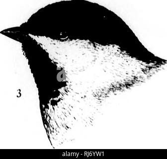 . Una historia de las aves de América del Norte [microforma] : aves terrestres. Las aves, ornitología; Oiseaux; Ornithologie. . Por favor tenga en cuenta que estas imágenes son extraídas de la página escaneada imágenes que podrían haber sido mejoradas digitalmente para mejorar la legibilidad, la coloración y el aspecto de estas ilustraciones pueden no parecerse perfectamente a la obra original. Baird, Spencer F. , 1823-1887; Brewer, T. M. Thomas (Mayo), 1814-1880; Ridgway, Robert, 1850-1929. Boston: Little, Brown