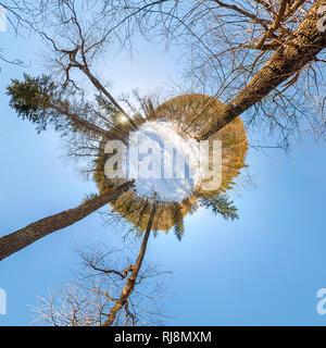 Camino en el bosque de invierno al amanecer. diminuto planeta 360 panorama