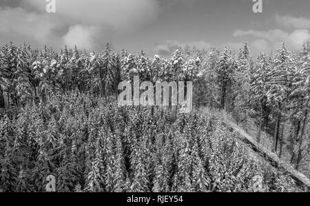 Paisaje invernal con abetos nevados, Tutzing, Alta Baviera, Baviera, Alemania, Europa