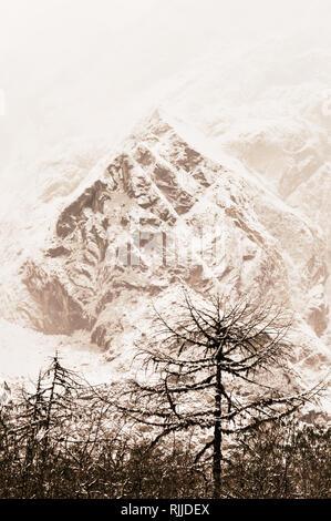 Majestuosos abetos blancos iluminado por la luz solar. Árboles cubiertos de blanco nieve esponjosas frosty en un hermoso día, entre altas montañas. Paisaje rural earl