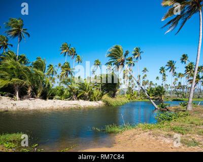 Hermosa y solitaria laguna en un paraíso en Puerto Rico, EE.UU.