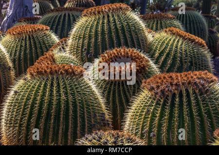 Colección de cactus que crece en un jardín botánico