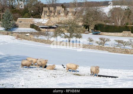 Cotswold Lion ovejas en la nieve delante de Upper Slaughter Manor. Upper Slaughter, Cotswolds, Gloucestershire, Inglaterra