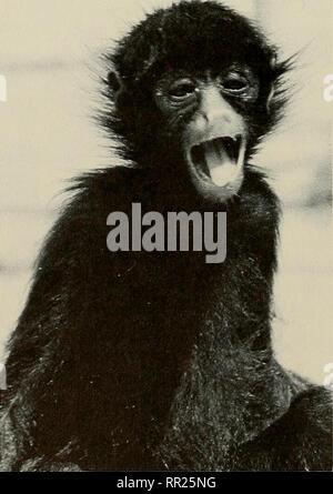 . Avances en herpetología y biología evolutiva : Ensayos en honor de Ernest E. Williams. Williams, Ernest E. (Ernest Edward); Herpetology; evolución. Figura 3. a. Menores mono capuchino tufted {Cebus apella apella). b. Joven adulto macho mono capuchino llorona {Cebus nigrivittatus). c. Hembra adulta (arriba) y subadulto (abajo) mono aullador (Alouatta senicu- lus). d. Los menores mono araña negro {Ateles paniscus paniscus). Por favor tenga en cuenta que estas imágenes son extraídas de la página escaneada imágenes que podrían haber sido mejoradas digitalmente para mejorar la legibilidad, la coloración y el aspecto de estas ilus