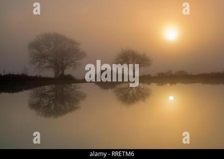 Niebla al amanecer Mogshade estanque El Bosque Nuevo Hampshire Inglaterra Foto de stock
