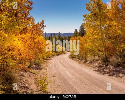 Camino de tierra en la parte oriental de Sierra Nevada durante el otoño con colores brillantes hojas y árboles de Aspen.