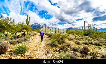 Mujer Senior senderismo sobre el Dique Trail en McDowell Sonaran conservar cerca de Scottsdale, Arizona, Estados Unidos de América