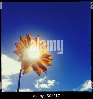 El sol brillando a través de una flor Foto de stock