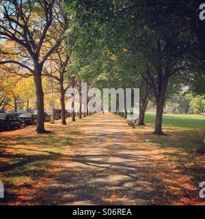 Midway Plaisance en el campus de la Universidad de Chicago a principios del otoño en Chicago, IL, USA. Foto de stock