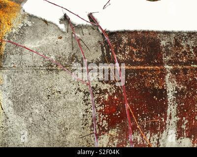 La naturaleza obra abstracta en un decadente depósito metálico cubierto de nieve, más cultivadas por rama roja de dogwood, textura, arte, antecedentes Foto de stock