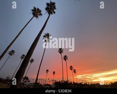 Palmeras altas y delgadas que rescatan para la colorida puesta de sol Encinitas California