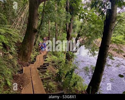 Excursionistas en un sendero en el valle Wailua cerca de la gruta de Fern en la isla de Hawai