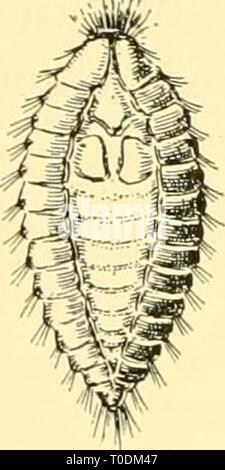 Biología elemental; una introducción a la biología elemental; una introducción a la ciencia de la vida elementarybiolog00grue Año: 1924