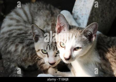 Esta única imagen muestra una pareja de gatos que viven en la calle en Bangkok. Estos dos gatos son los mejores amigos y son muy agradables