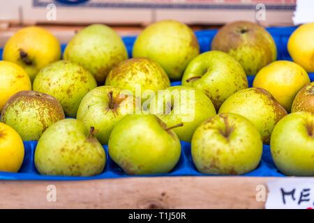 Acercamiento de muchos golden delicious amarillo verde manzana en la casilla en el Farmer's Market tienda muestra con detalle y textura en Italia