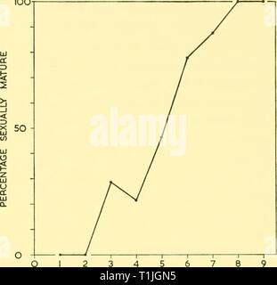 Descubrimiento descubrimiento (1962) informes informes discoveryreports31inst Año: 1962 longitud en pies Text-Fig. 33. Suavizan las frecuencias de longitud de sexualmente inmaduros y las hembras sexualmente maduras. 2 3 4 5 6 7 8 AÑOS DE Ear Plug (años) Texto-Fig. 34. Porcentaje de las hembras sexualmente maduras en sucesivos grupos de edad. como una distribución de frecuencia normal, con un valor medio que corresponde a la duración media en la pubertad, la media es de 65-41 pies. (Desviación estándar 2-07, 0-16 de error estándar). Esto está en estrecho acuerdo con el valor del punto de intersección de las curvas. La longitud promedio en la pubertad es, por lo tanto, ta