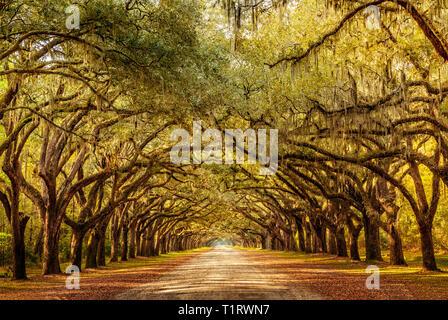 Vida callejón con árboles de roble en Georgia