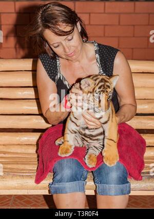 Pequeño tigre bebé en el regazo de una mujer.