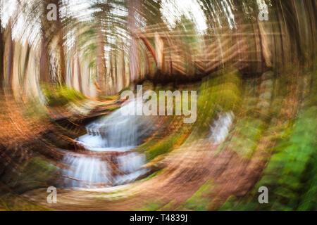 Desenfoque de movimiento rotacional en un bosque, spinning efecto