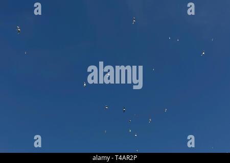 Hermosa vista de las gaviotas volando en el cielo azul en el mar. Pájaros volando en la soleada, momento atmosférica. Vista desde la tierra