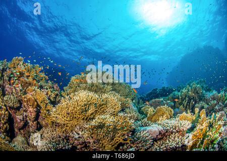 Vibrantes arrecifes de coral en aguas tropicales multicolores, con corales duros y blandos, rodeado de naranjos y peces de plata, con el sol y la superficie de los océanos